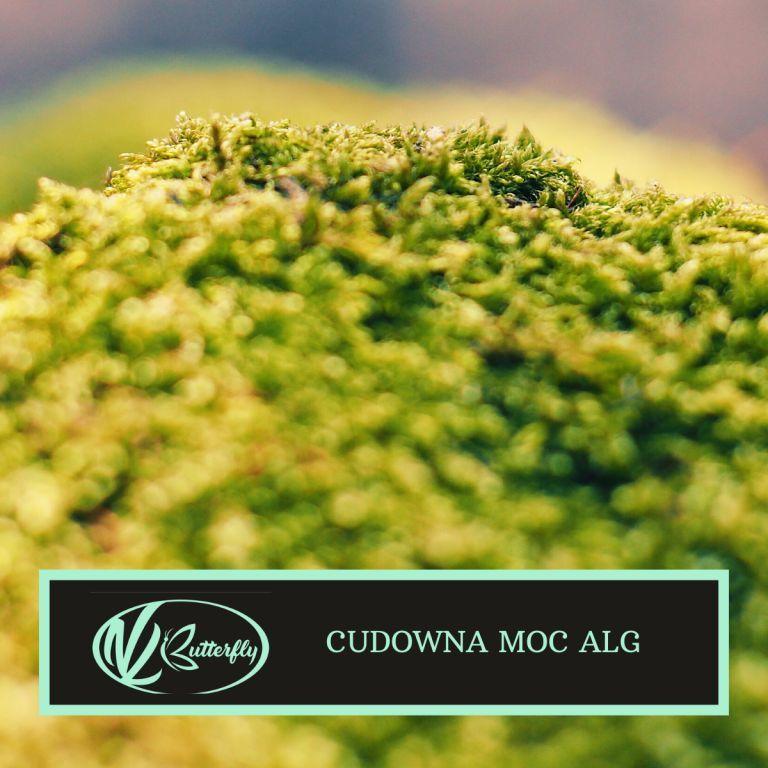 Pocałunek oceanu — cudowna moc alg